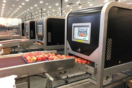 Robotics Plus - Aporo apple packer - 2