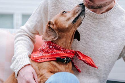 Odie Pet Insurance